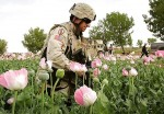 The war on opium in Afghanistan